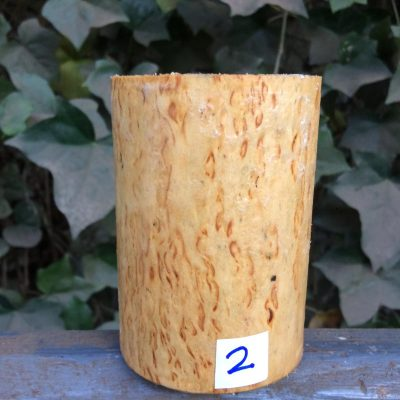 Curly Karelian / Masur Birch 4 long x 3 inch diameter