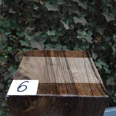 Indian Laurel 6x6x3 inches