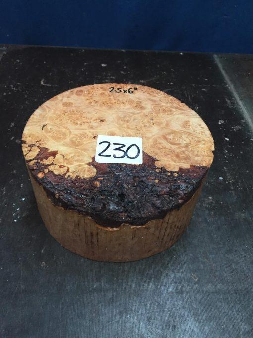Maple Burr (Premium) 6x2.5 inches