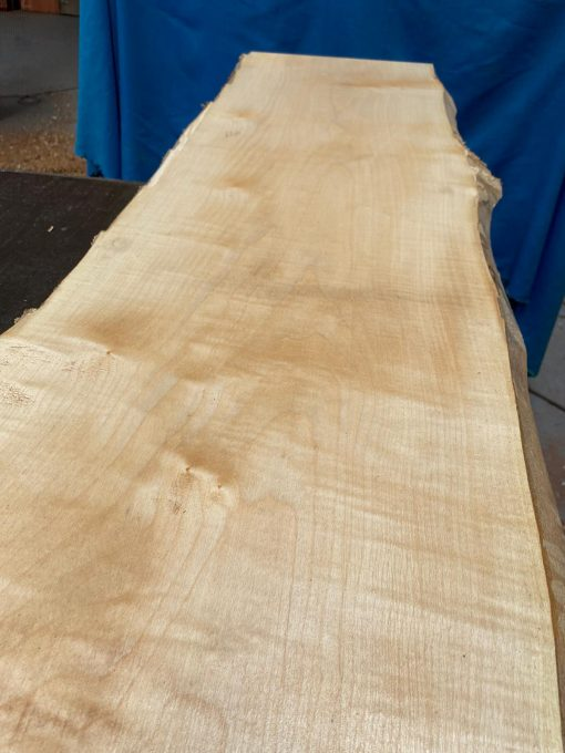 Curly Maple 1750x360x23mm