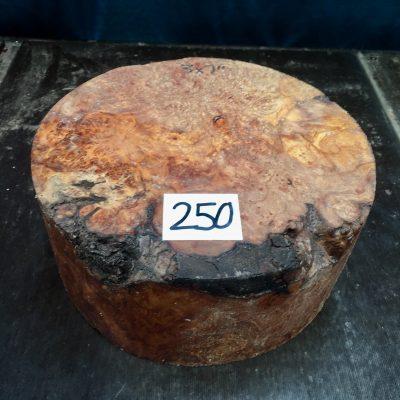 Maple Burr (Premium) 7x3 inches
