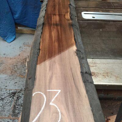 American Walnut 1355x245x31 mm